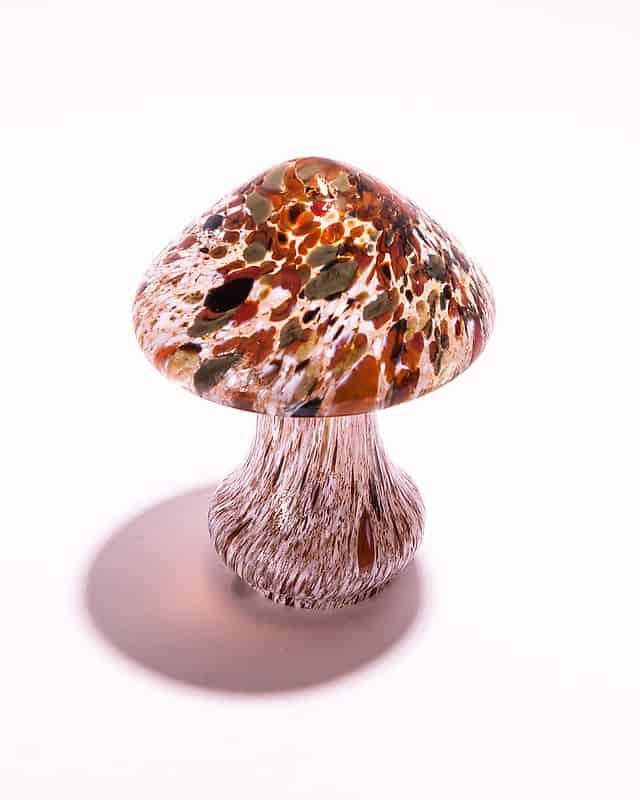 Интерьерный гриб