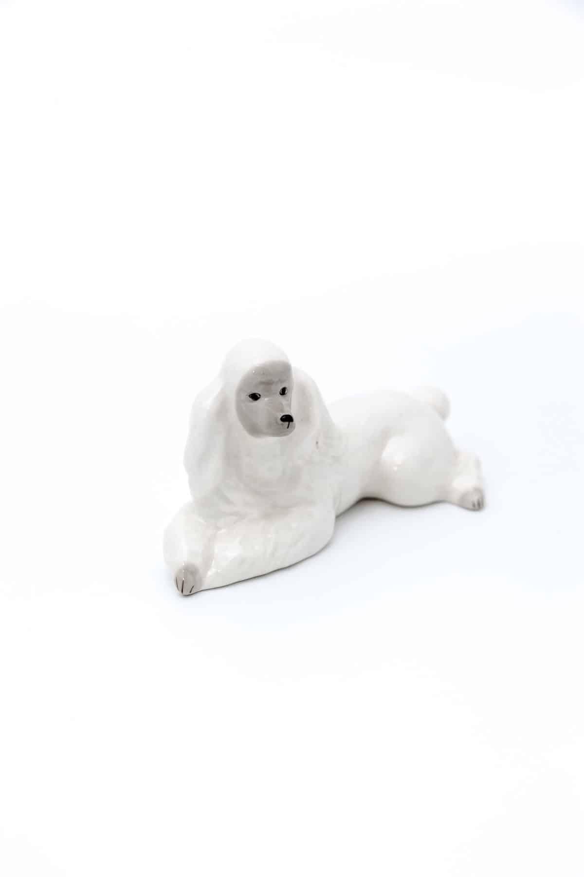 Белый пудель
