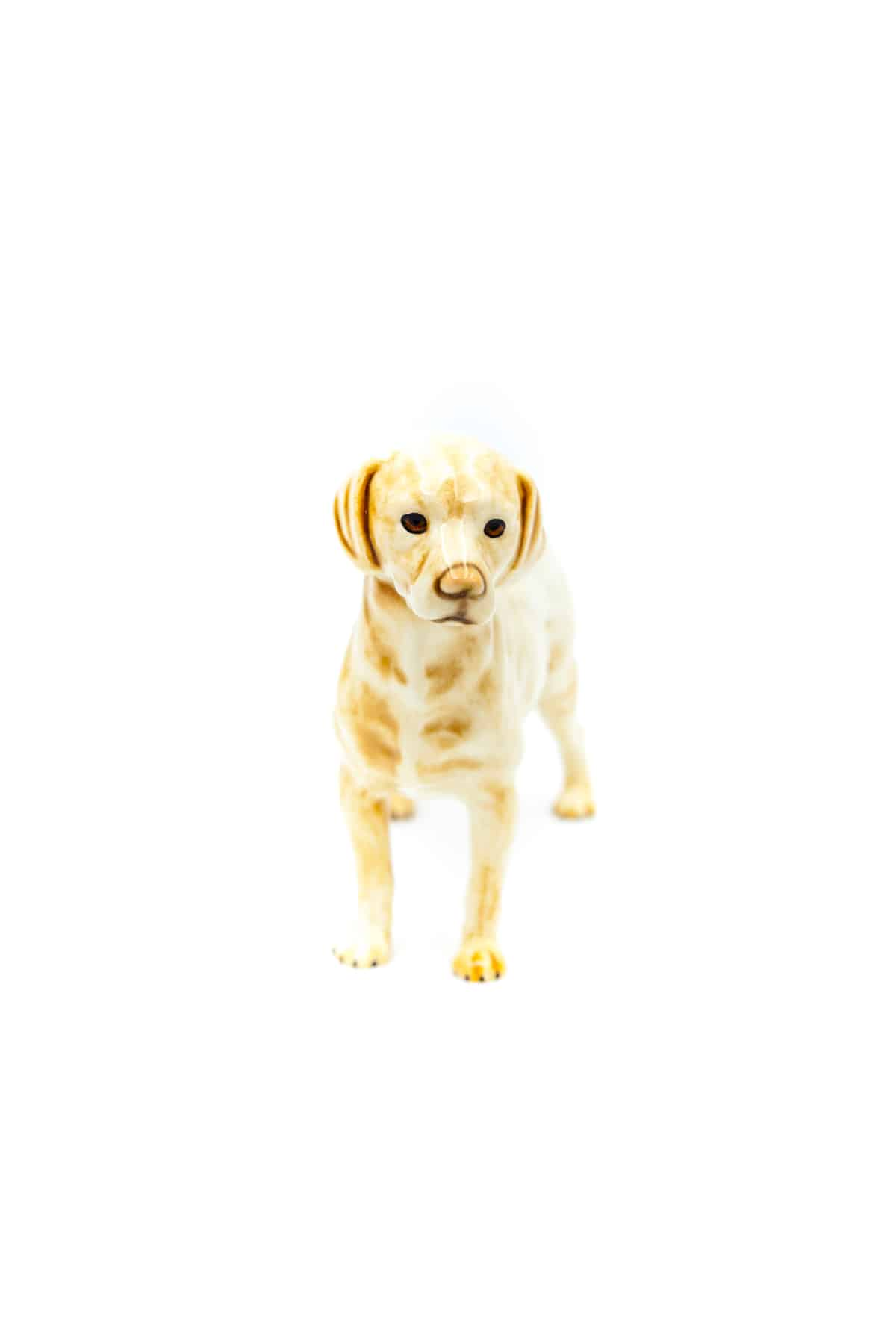 farforovaya statuetka labrador